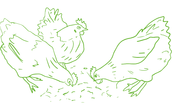 An illustration of chickens feeding