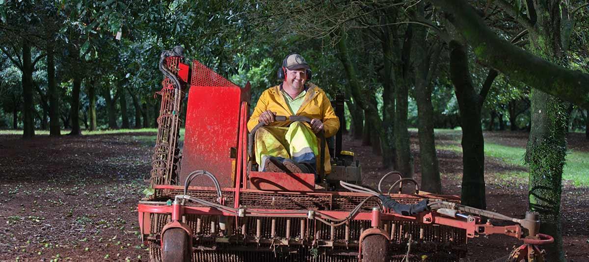 Worker driving harvester