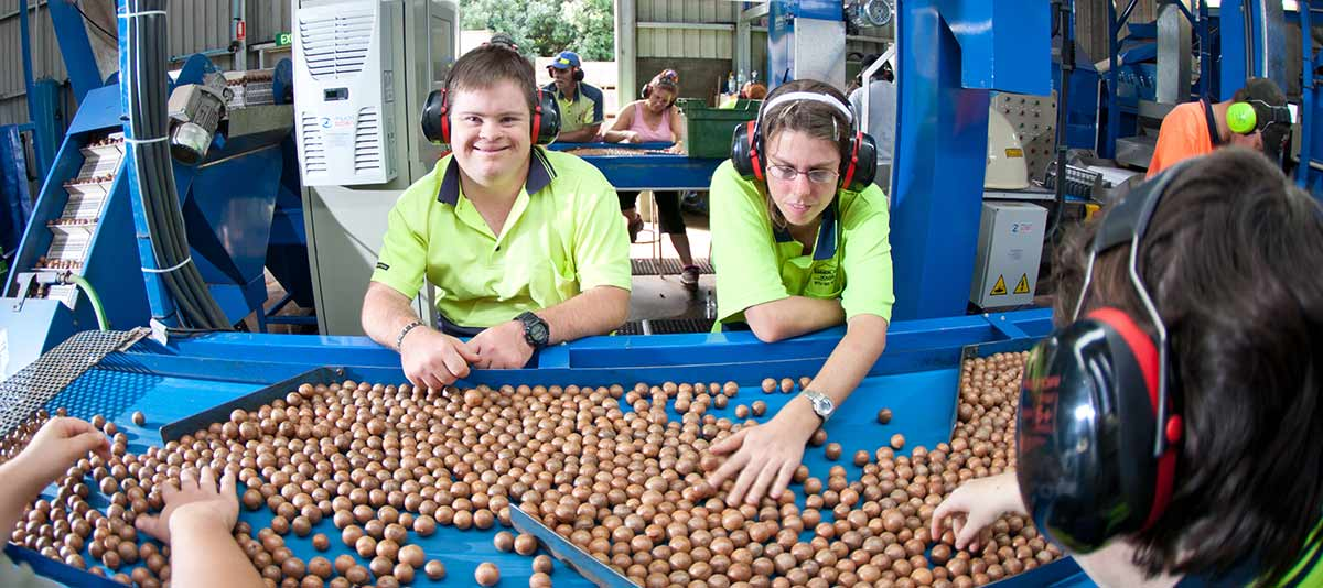 Workers sort nuts at a macadamia nut grading machine