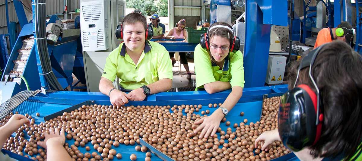 Workers sorting macadamias