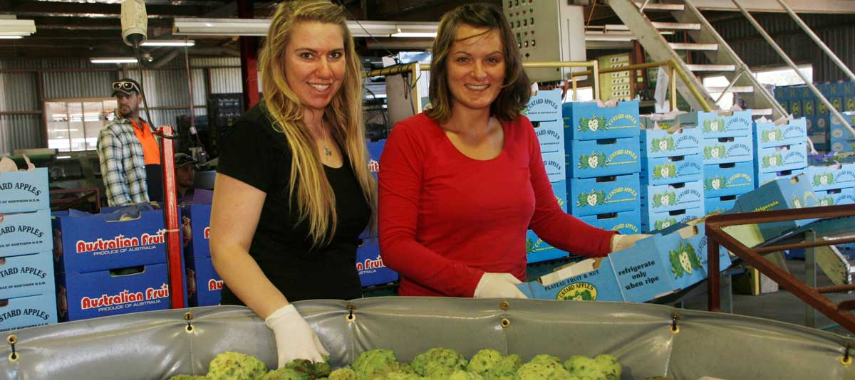 Two smiling workers pack custard apples into a carton